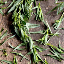 Mexican Tarragon Seeds