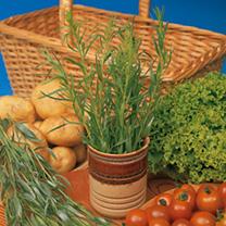 Herb Plant - French Tarragon