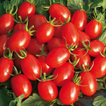 Tomato Seeds - F1 Sweet Olive