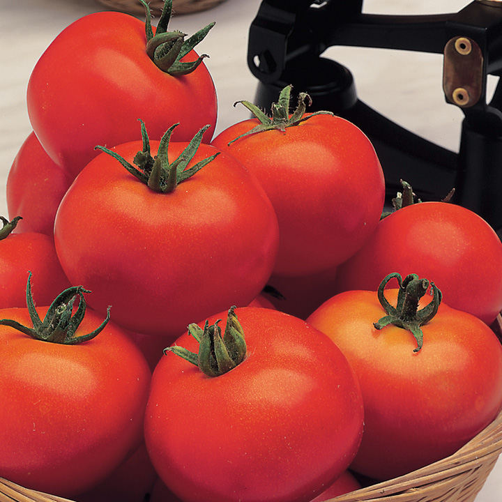 Tomato (Organic) Seeds - Moneymaker