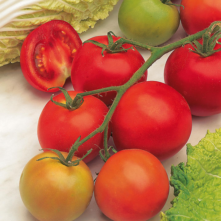 Tomato Seeds - F1 Shirley