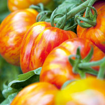 Tomato Seeds - Striped Stuffer