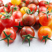 Tomato Plants - Artisan Bumble Bee Mix