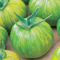 Tomato (Organic) Seeds - Green Zebra