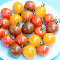 Tomato Seeds - Artisan Bumble Bee Mix