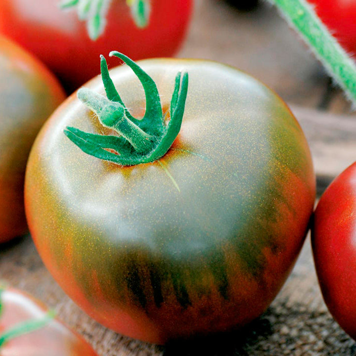 Tomato Seeds - Black Prince
