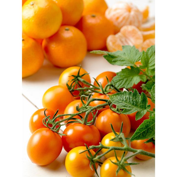Grafted Tomato Quad Cocktail Plant - Tutti Frutti 'Mandarin'