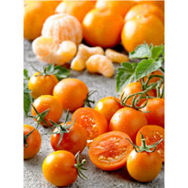Tomato Grafted Plant - Tutti Frutti F1 Mandarin