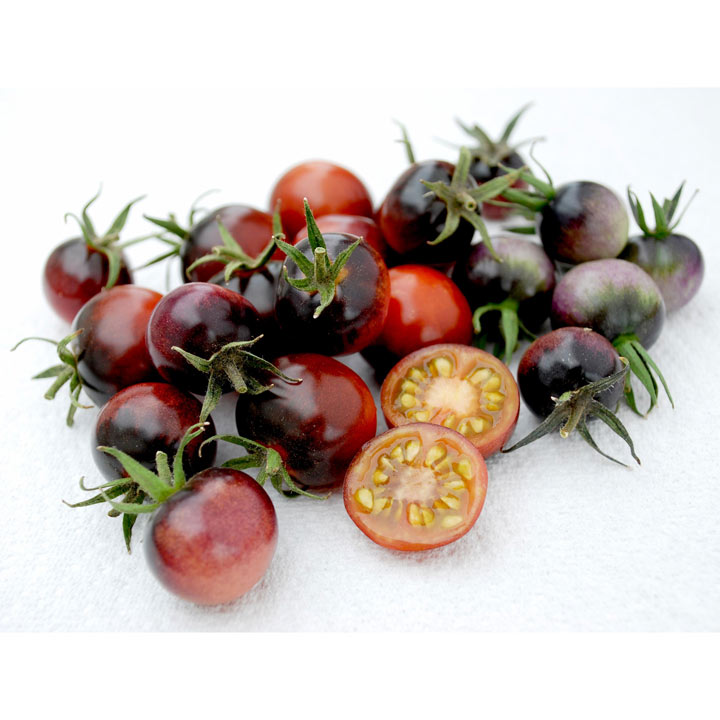 Grafted Tomato Plants - Blue Berries
