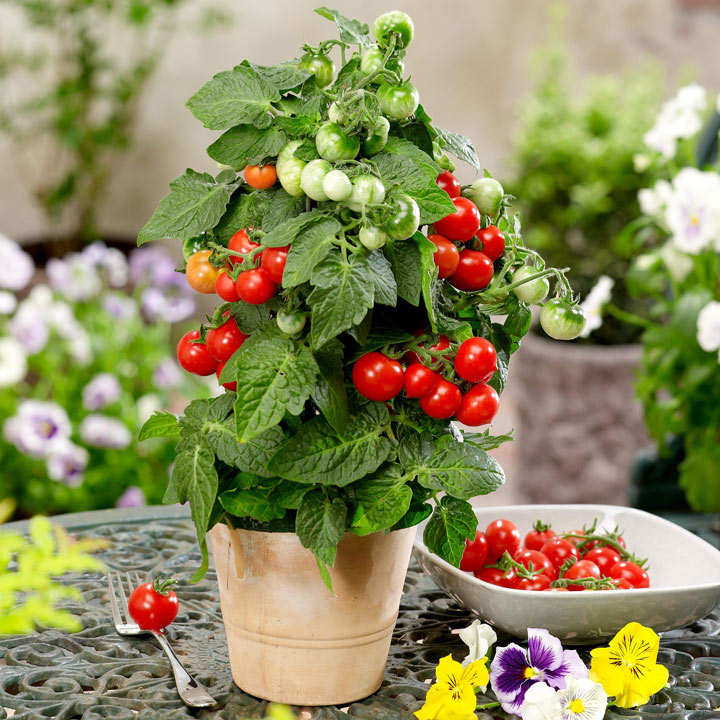 windowsill collection 4 p12 view all vegetable plants vegetable plants gardening. Black Bedroom Furniture Sets. Home Design Ideas