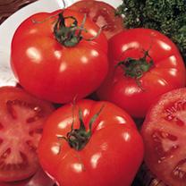Tomato Seeds - Marmande