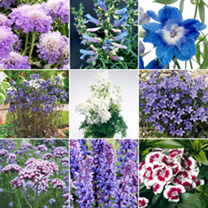 Blue Collection Plants