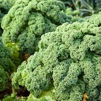 Is kale a 'superfood'?
