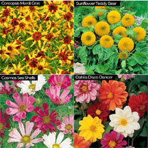 Flower Seed with 12 Cell Propagator