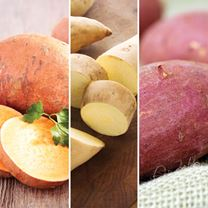 Sweet Potato Plants - Speciality Collection